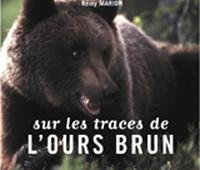 Sur-les-traces-de-lOurs-Brun
