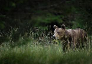 Objectif nature agence de voyage for Agence brun paysage