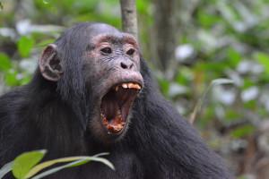 Ouganda PPichol Mai 2019 (35)